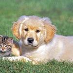 Ο Δήμος Πεντέλης ενημερώνει και καταδικάζει τα φαινόμενα δηλητηρίασης ζώων